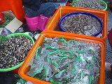 D06蝦蟹.jpg